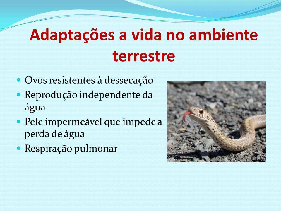 Adaptações a vida no ambiente terrestre
