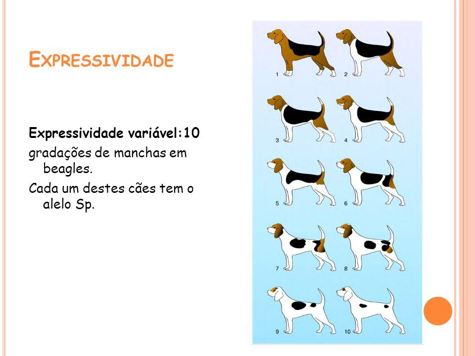 Expressividade Expressividade variável:10 gradações de manchas em beagles.