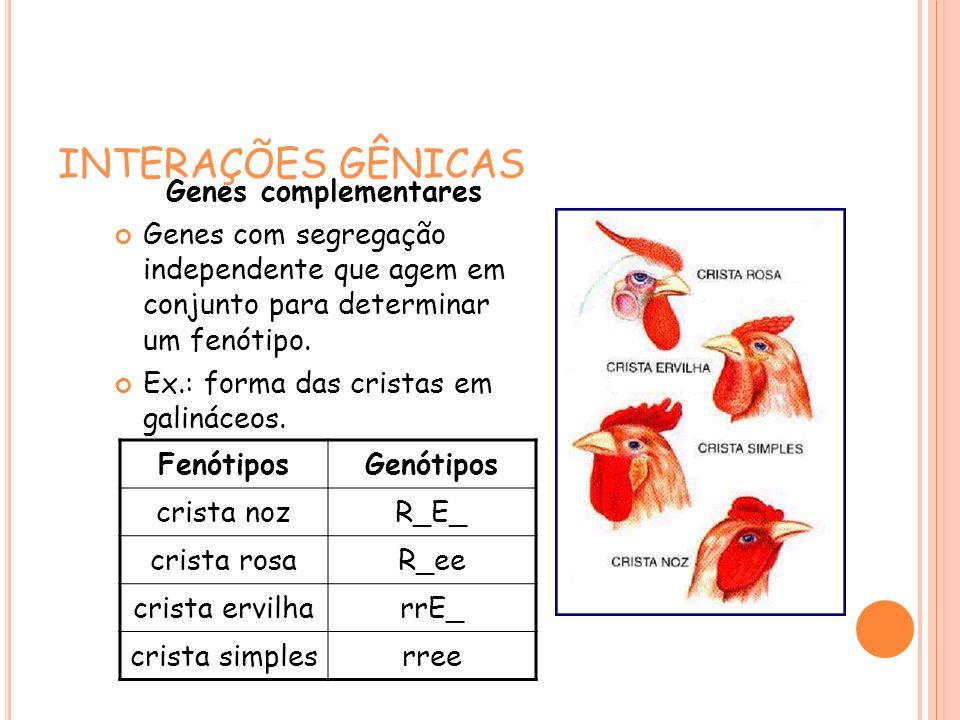 INTERAÇÕES GÊNICAS Genes complementares