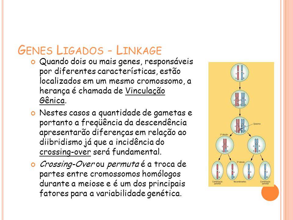Genes Ligados - Linkage