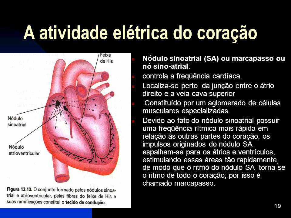 A atividade elétrica do coração