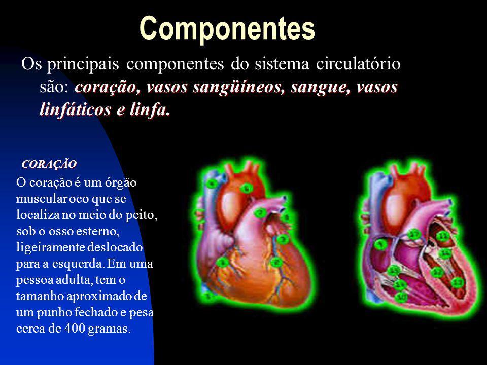 Componentes Os principais componentes do sistema circulatório são: coração, vasos sangüíneos, sangue, vasos linfáticos e linfa.