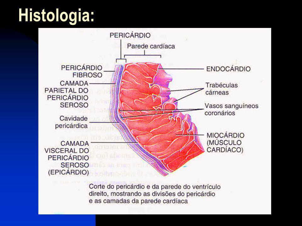 Histologia: