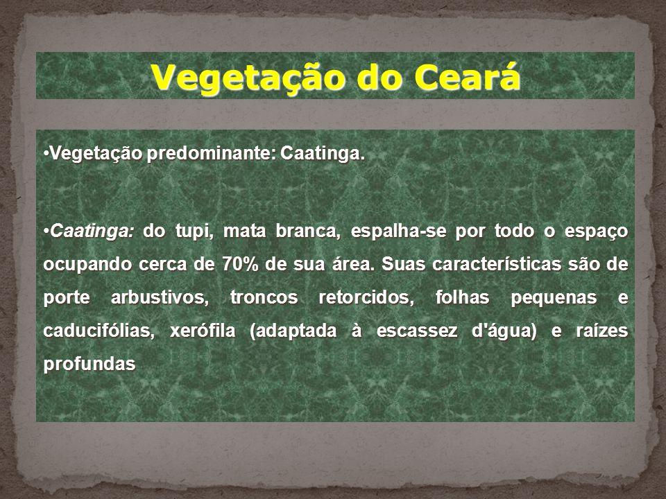 Vegetação do Ceará Vegetação predominante: Caatinga.