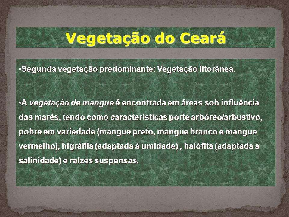 Vegetação do Ceará Segunda vegetação predominante: Vegetação litorânea.