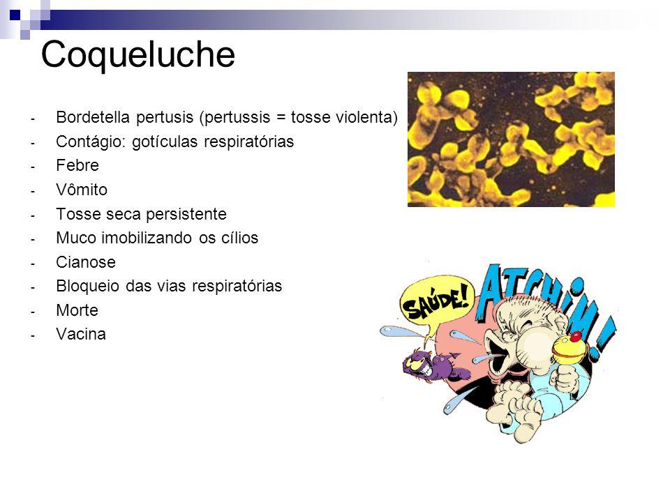 Coqueluche Bordetella pertusis (pertussis = tosse violenta)