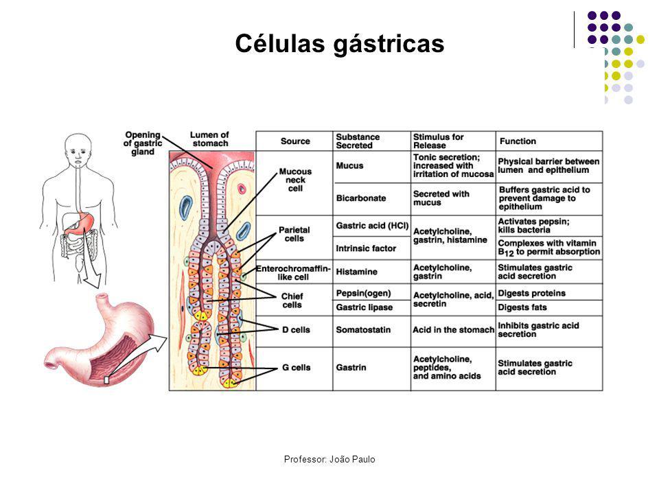 Células gástricas Professor: João Paulo