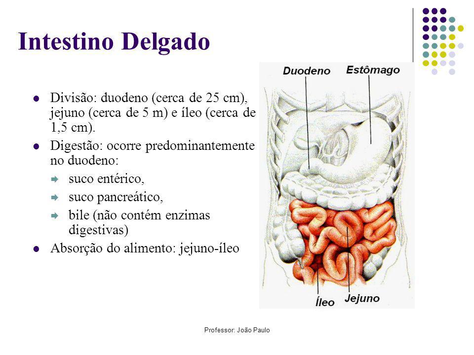 Intestino Delgado Divisão: duodeno (cerca de 25 cm), jejuno (cerca de 5 m) e íleo (cerca de 1,5 cm).