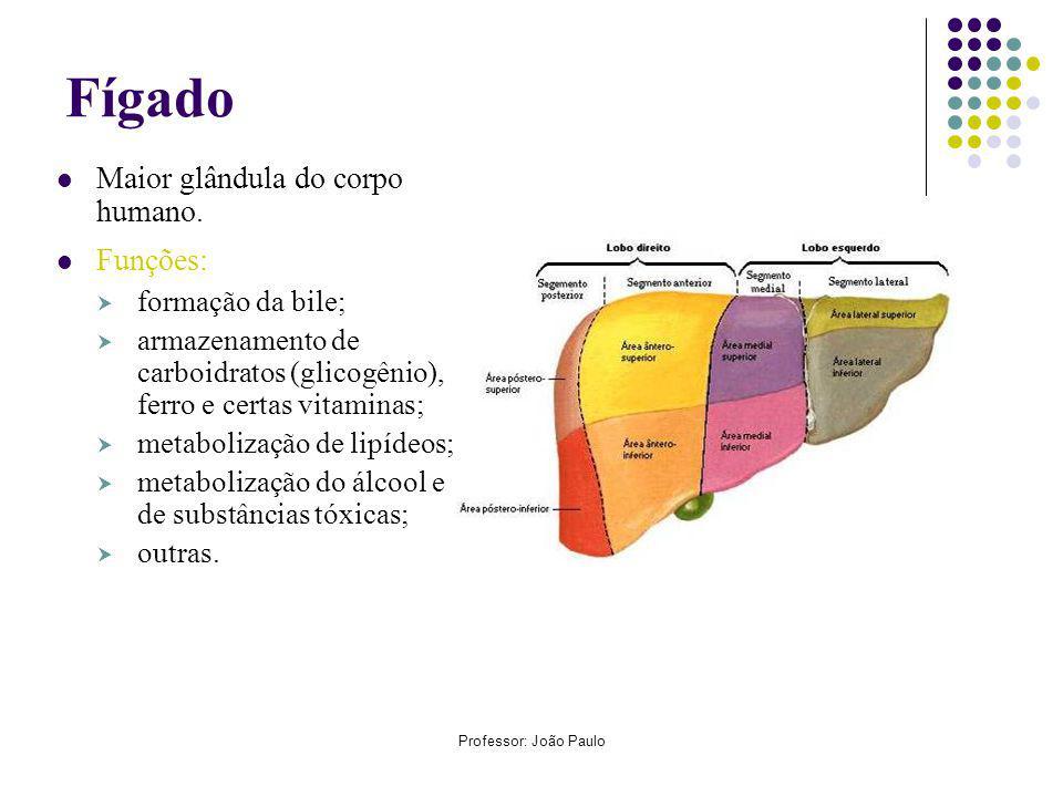 Fígado Maior glândula do corpo humano. Funções: formação da bile;