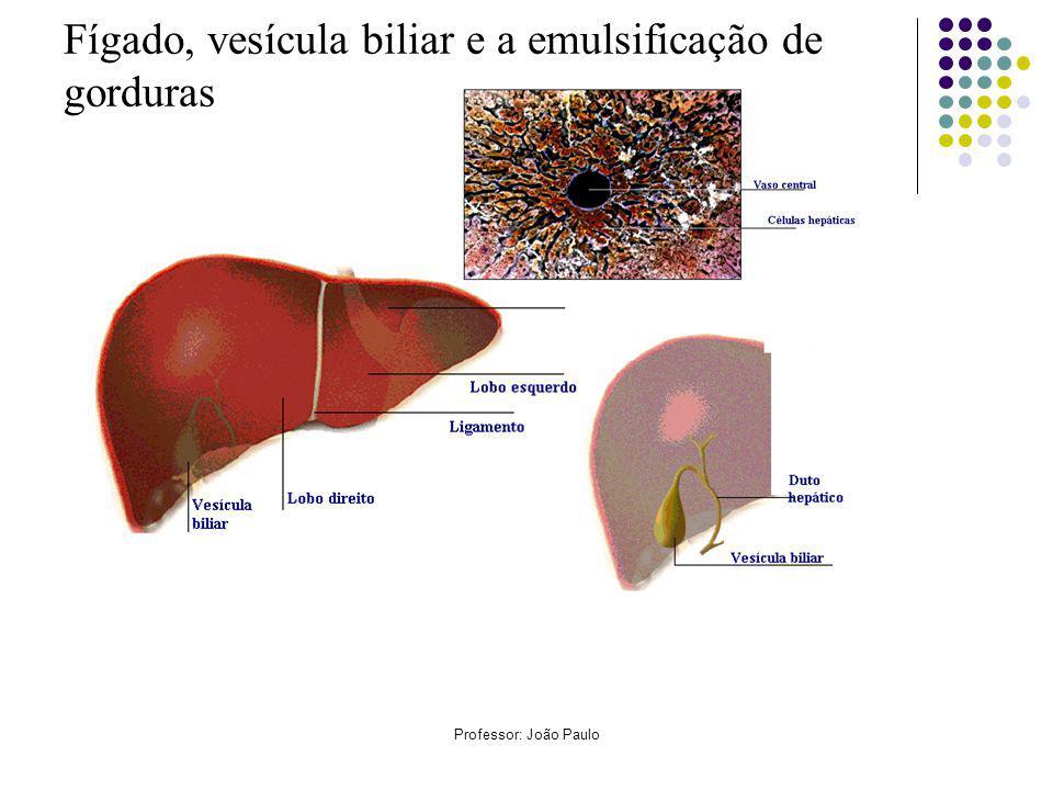Fígado, vesícula biliar e a emulsificação de gorduras