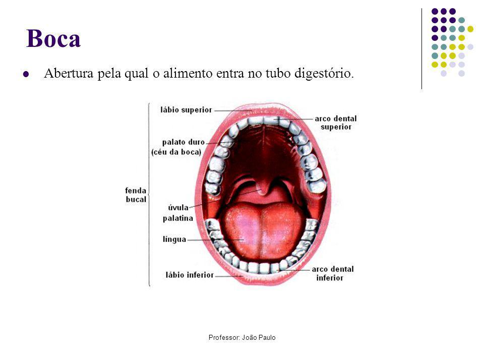 Boca Abertura pela qual o alimento entra no tubo digestório.