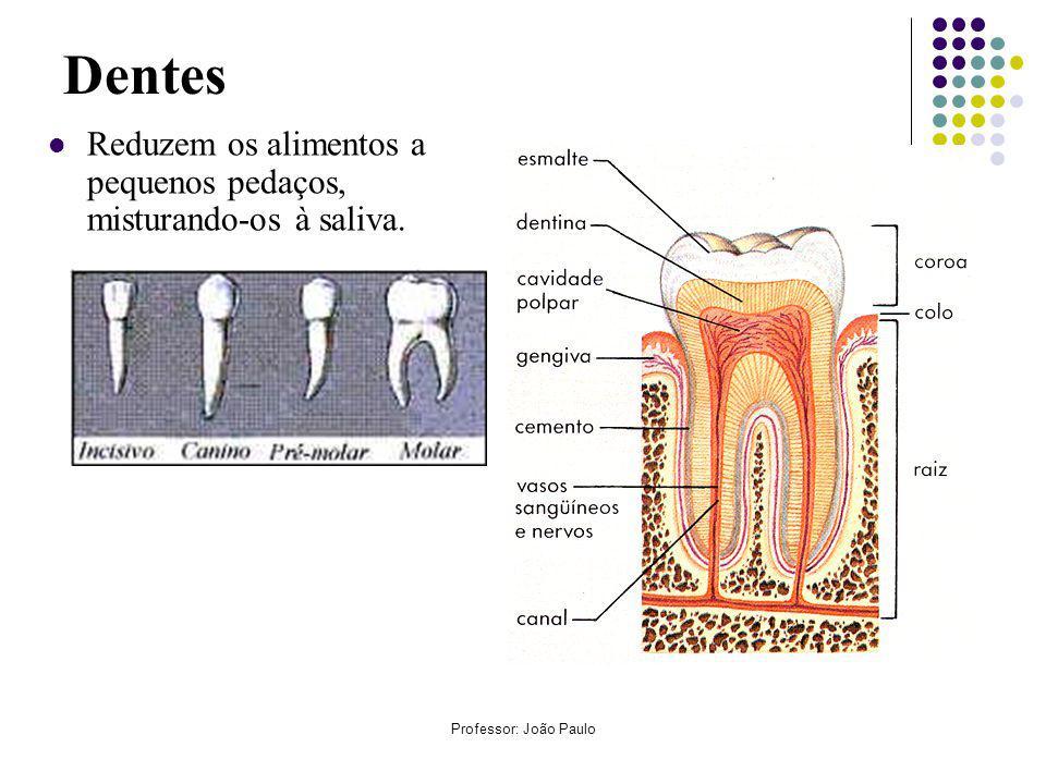 Dentes Reduzem os alimentos a pequenos pedaços, misturando-os à saliva. Professor: João Paulo