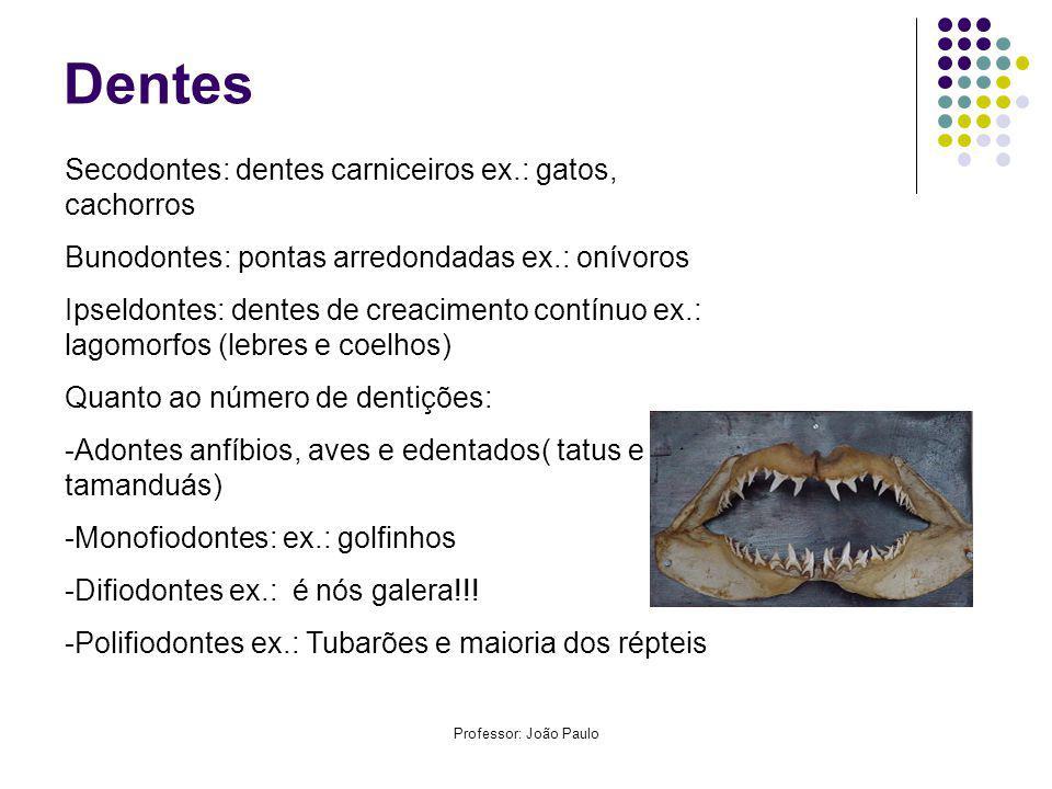 Dentes Secodontes: dentes carniceiros ex.: gatos, cachorros