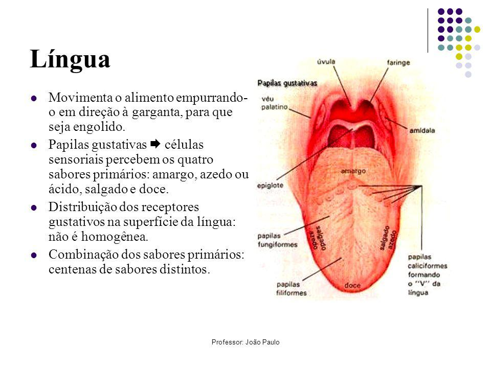 Língua Movimenta o alimento empurrando-o em direção à garganta, para que seja engolido.