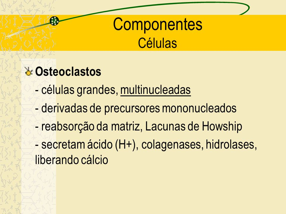 Componentes Células Osteoclastos - células grandes, multinucleadas