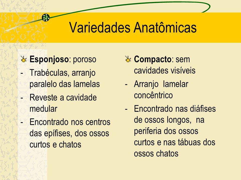 Variedades Anatômicas