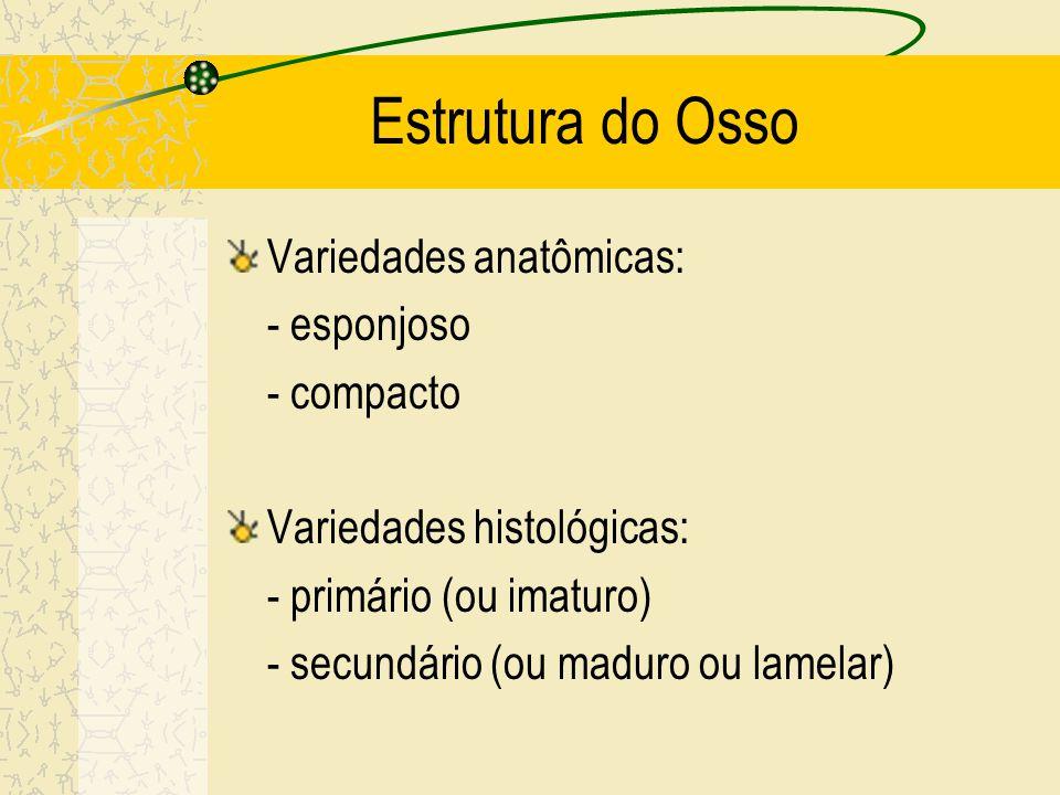 Estrutura do Osso Variedades anatômicas: - esponjoso - compacto