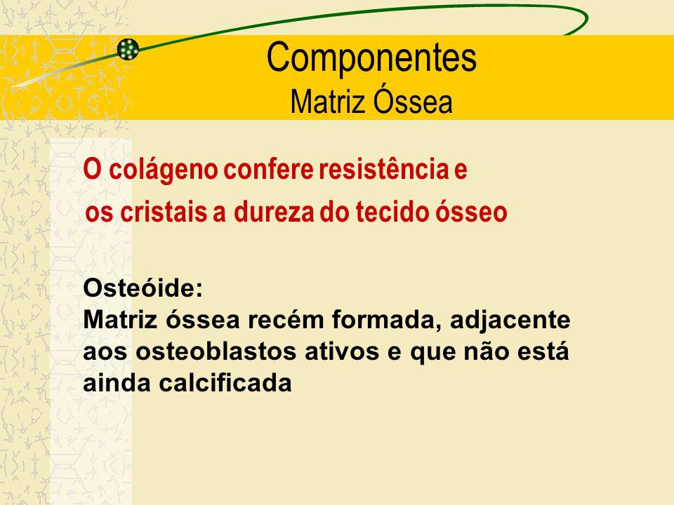 Componentes Matriz Óssea