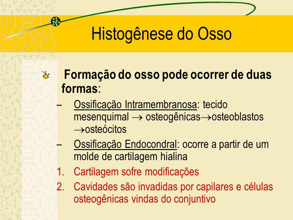 Histogênese do Osso Formação do osso pode ocorrer de duas formas: