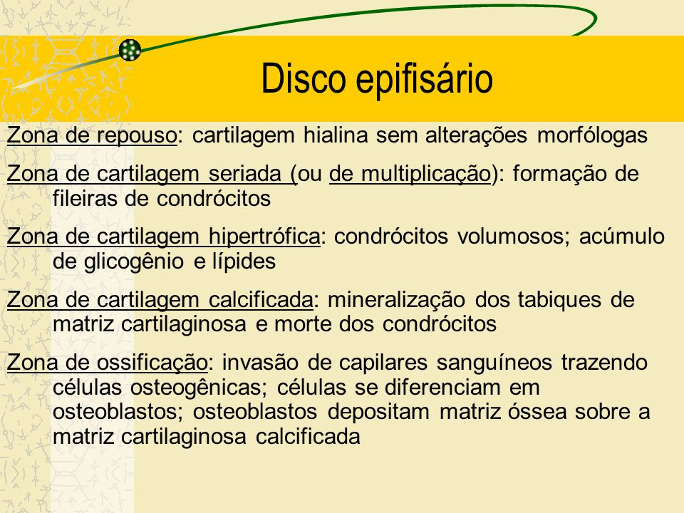 Disco epifisário Zona de repouso: cartilagem hialina sem alterações morfólogas.