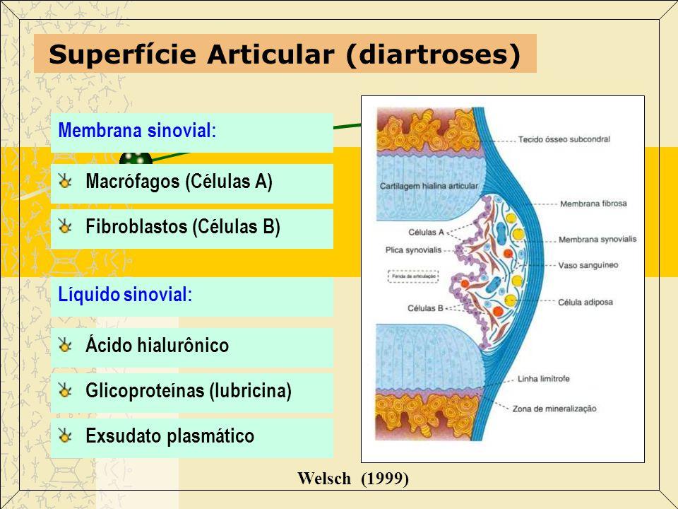 Superfície Articular (diartroses)