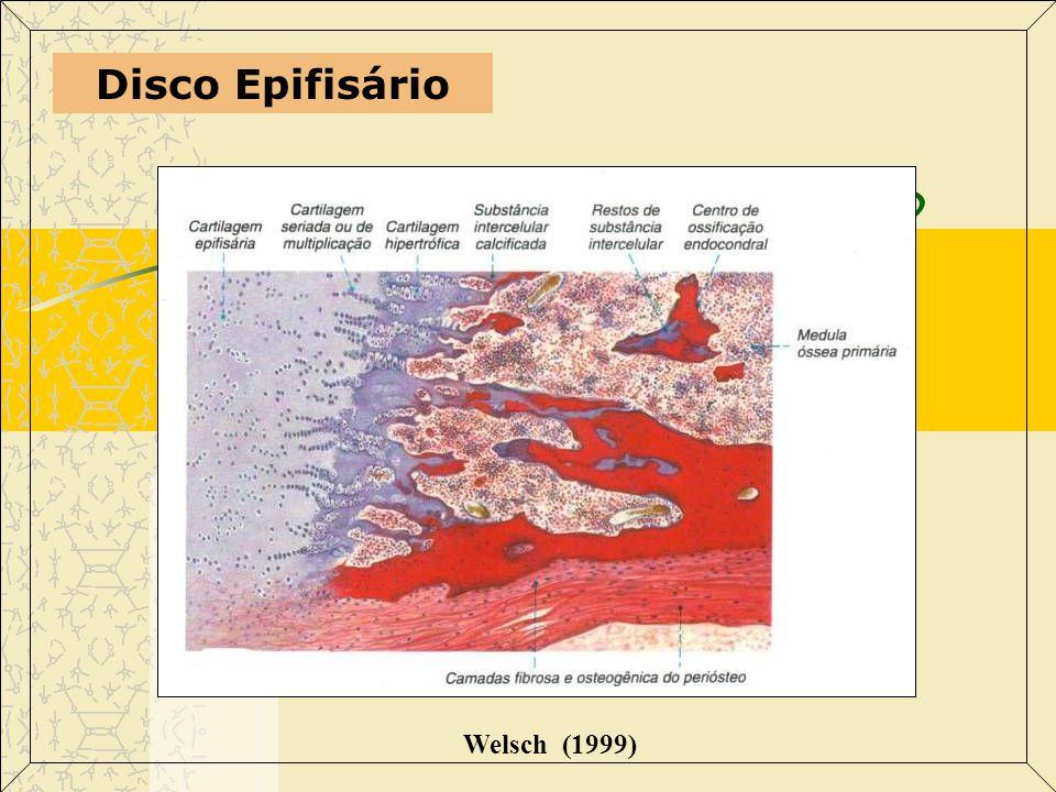 Disco Epifisário Welsch (1999)