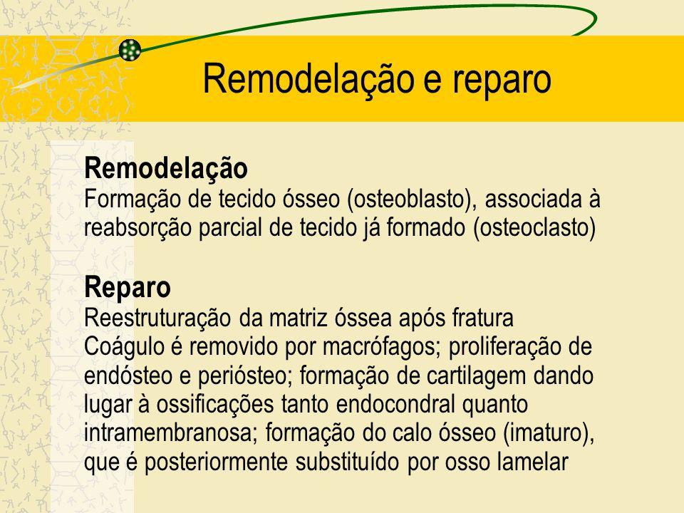 Remodelação e reparo