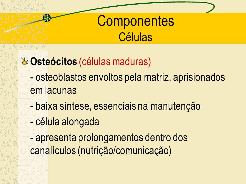 Componentes Células Osteócitos (células maduras)