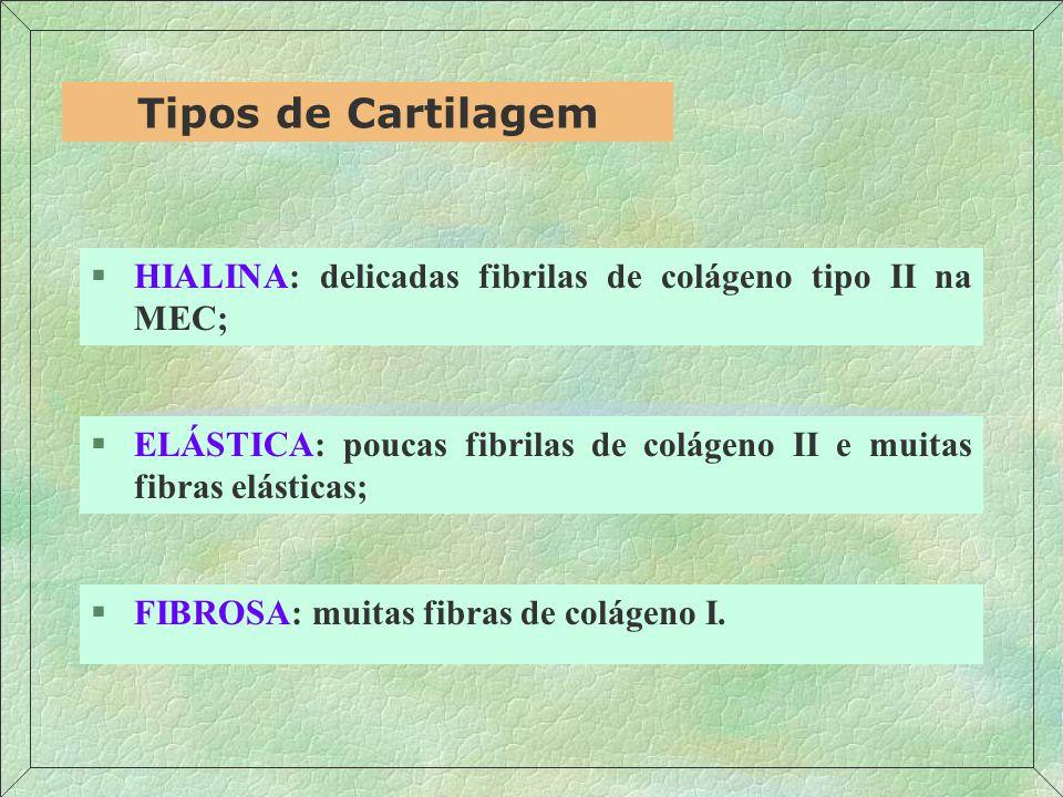 HIALINA: delicadas fibrilas de colágeno tipo II na MEC;
