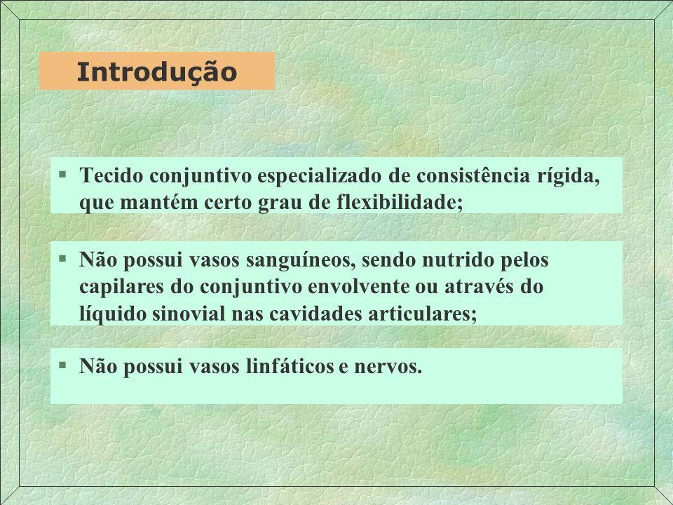 Introdução Tecido conjuntivo especializado de consistência rígida, que mantém certo grau de flexibilidade;
