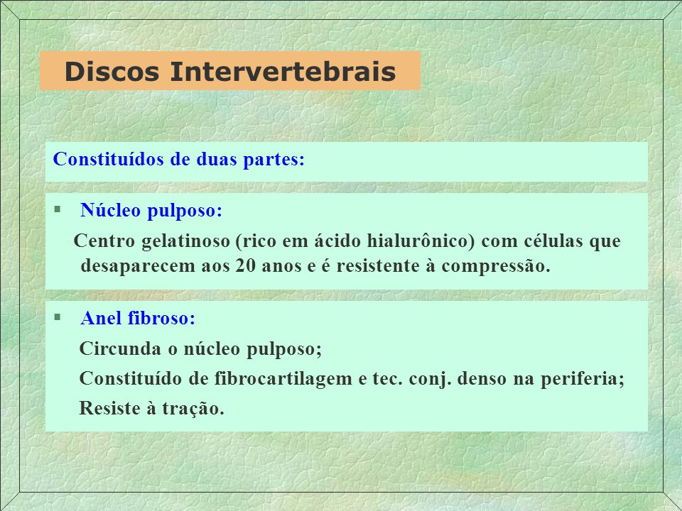 Discos Intervertebrais
