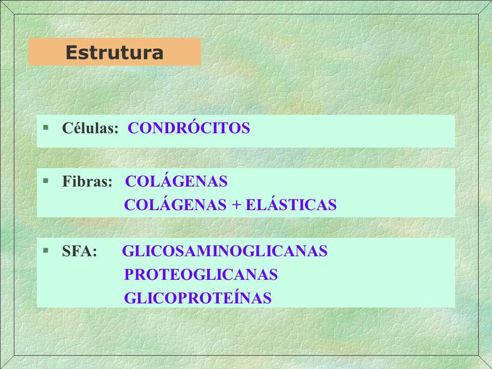 Estrutura Células: CONDRÓCITOS Fibras: COLÁGENAS COLÁGENAS + ELÁSTICAS