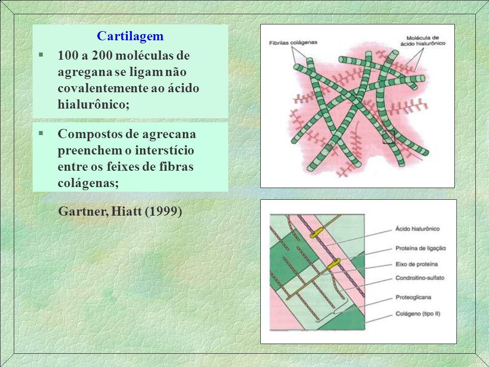 Cartilagem 100 a 200 moléculas de agregana se ligam não covalentemente ao ácido hialurônico;