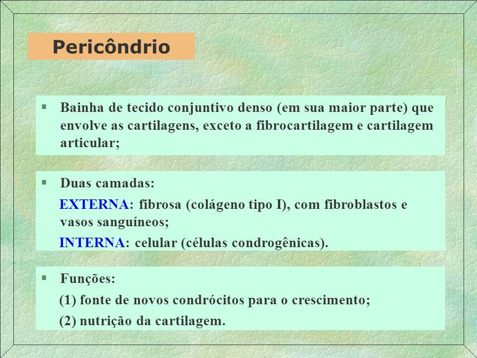 Pericôndrio Bainha de tecido conjuntivo denso (em sua maior parte) que envolve as cartilagens, exceto a fibrocartilagem e cartilagem articular;