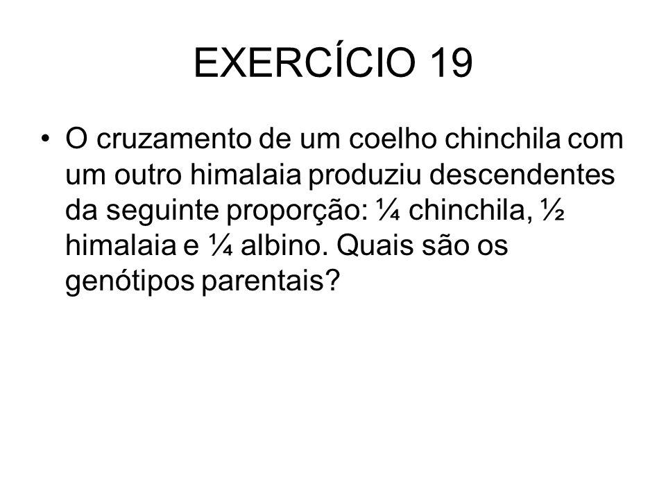 EXERCÍCIO 19