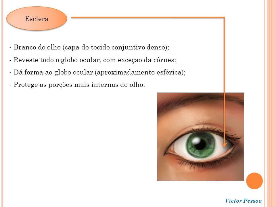 Branco do olho (capa de tecido conjuntivo denso);