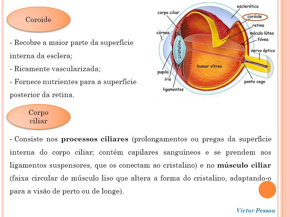 Recobre a maior parte da superfície interna da esclera;