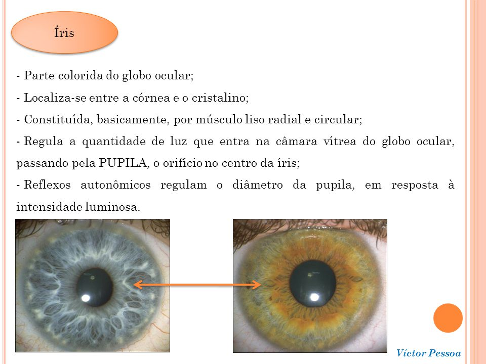 Parte colorida do globo ocular;