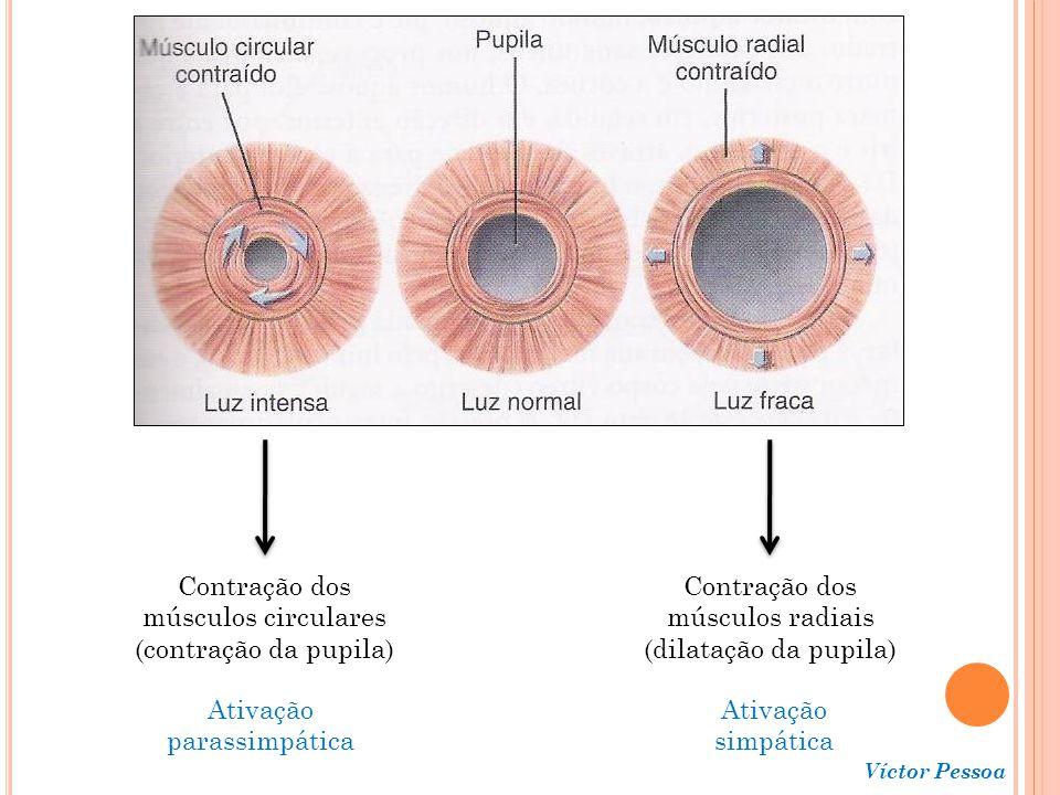 Contração dos músculos circulares (contração da pupila)