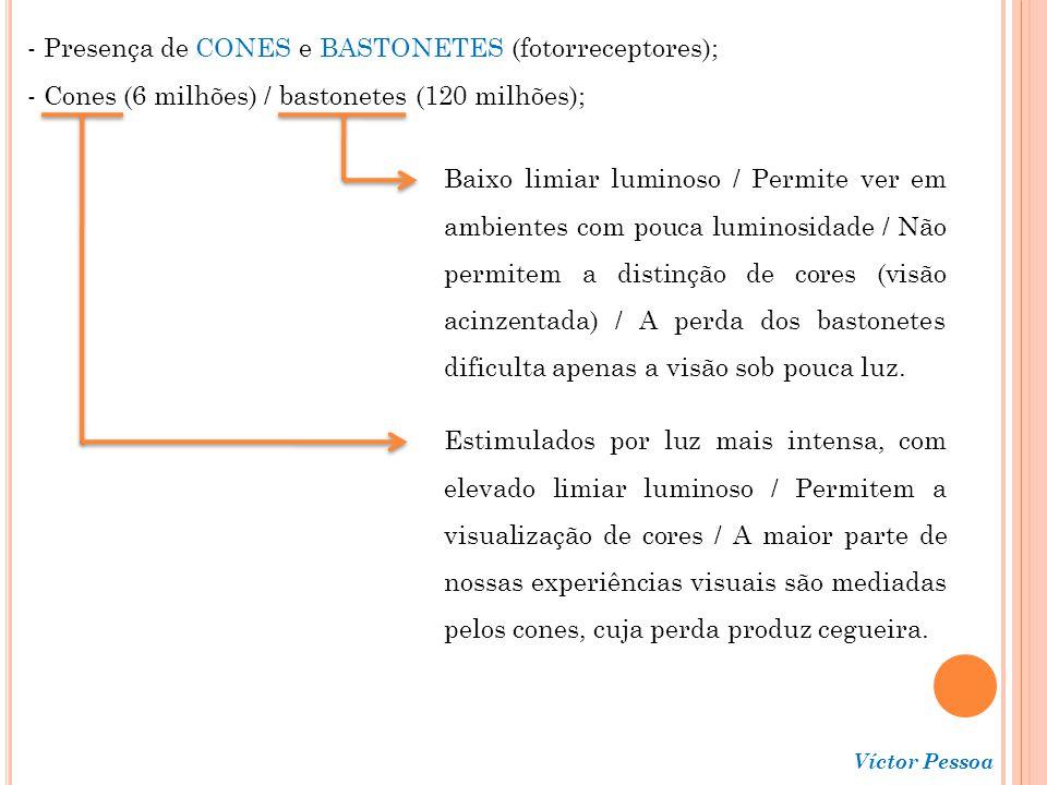 Presença de CONES e BASTONETES (fotorreceptores);