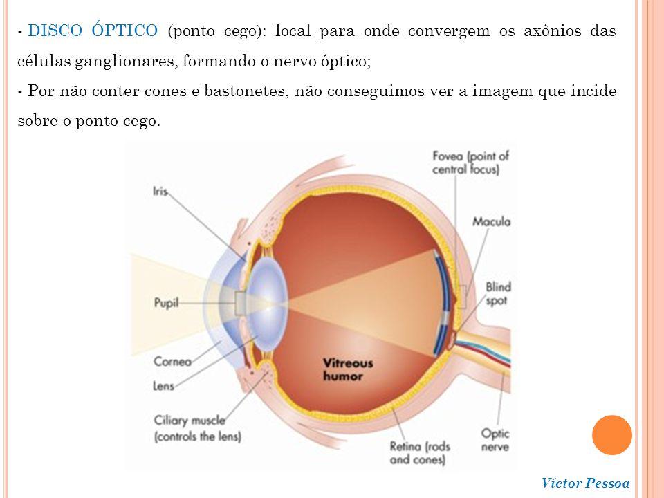 DISCO ÓPTICO (ponto cego): local para onde convergem os axônios das células ganglionares, formando o nervo óptico;