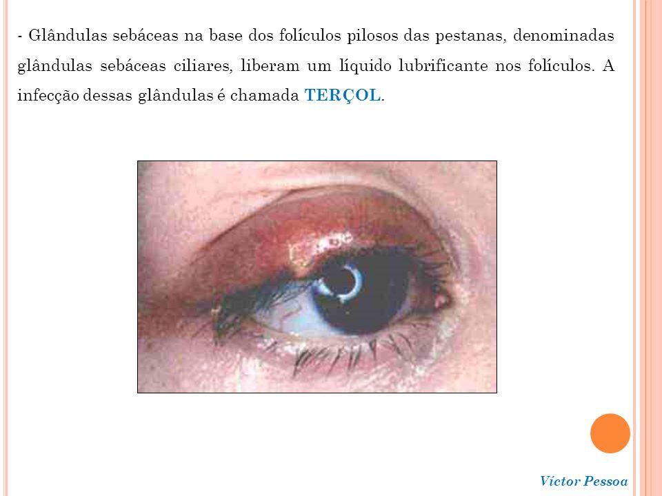 - Glândulas sebáceas na base dos folículos pilosos das pestanas, denominadas glândulas sebáceas ciliares, liberam um líquido lubrificante nos folículos. A infecção dessas glândulas é chamada TERÇOL.