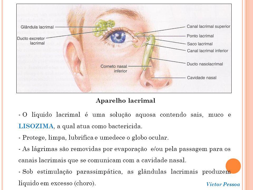 Protege, limpa, lubrifica e umedece o globo ocular.