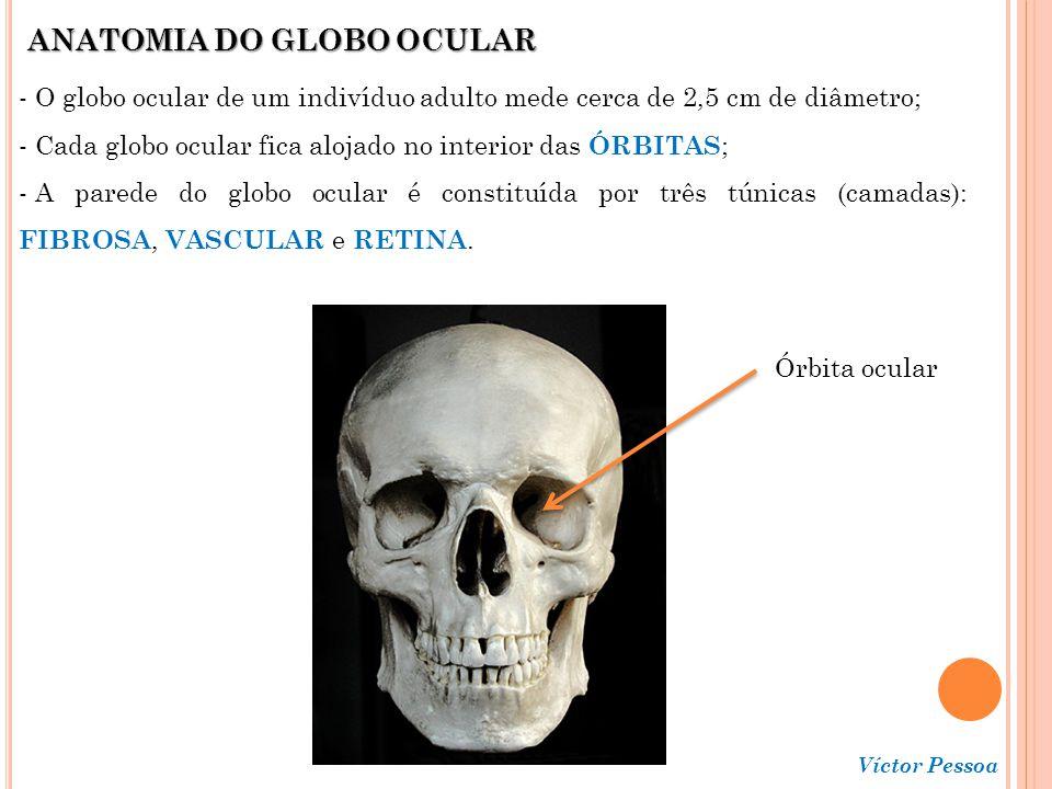 ANATOMIA DO GLOBO OCULAR