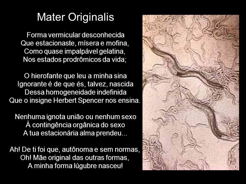 Mater Originalis Forma vermicular desconhecida