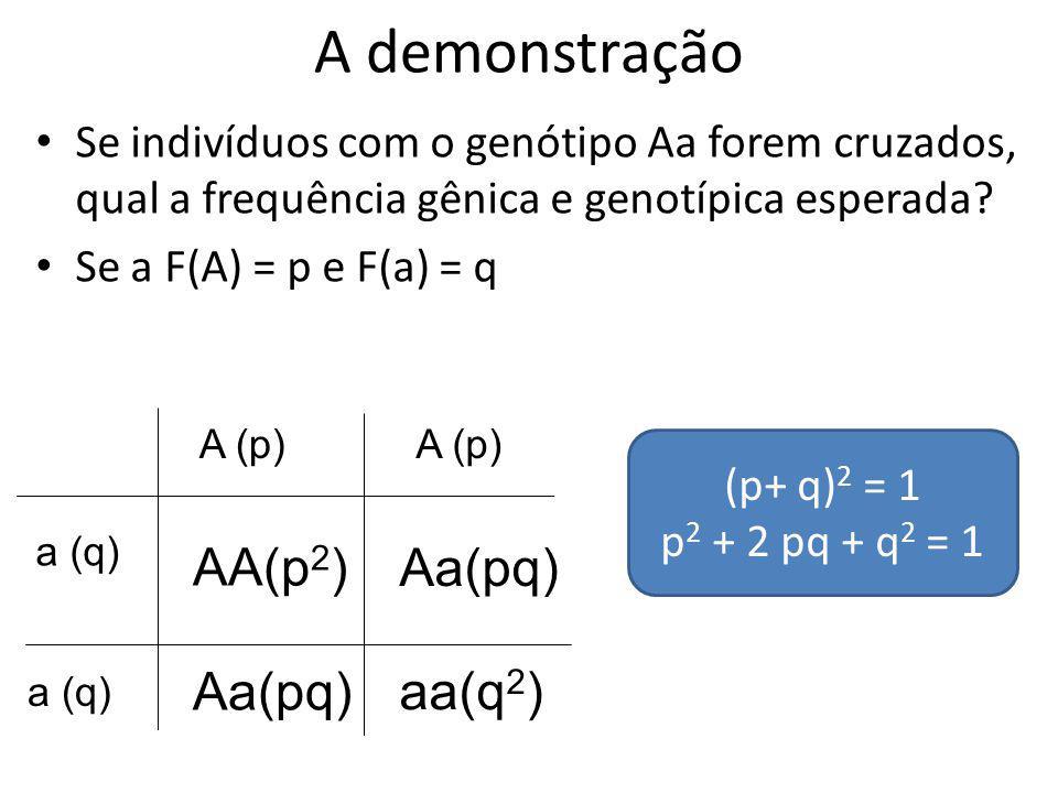 A demonstração AA(p2) Aa(pq) Aa(pq) aa(q2)