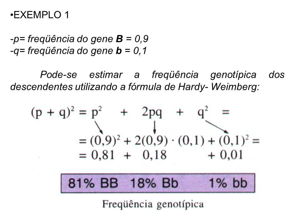 EXEMPLO 1 -p= freqüência do gene B = 0,9. -q= freqüência do gene b = 0,1.