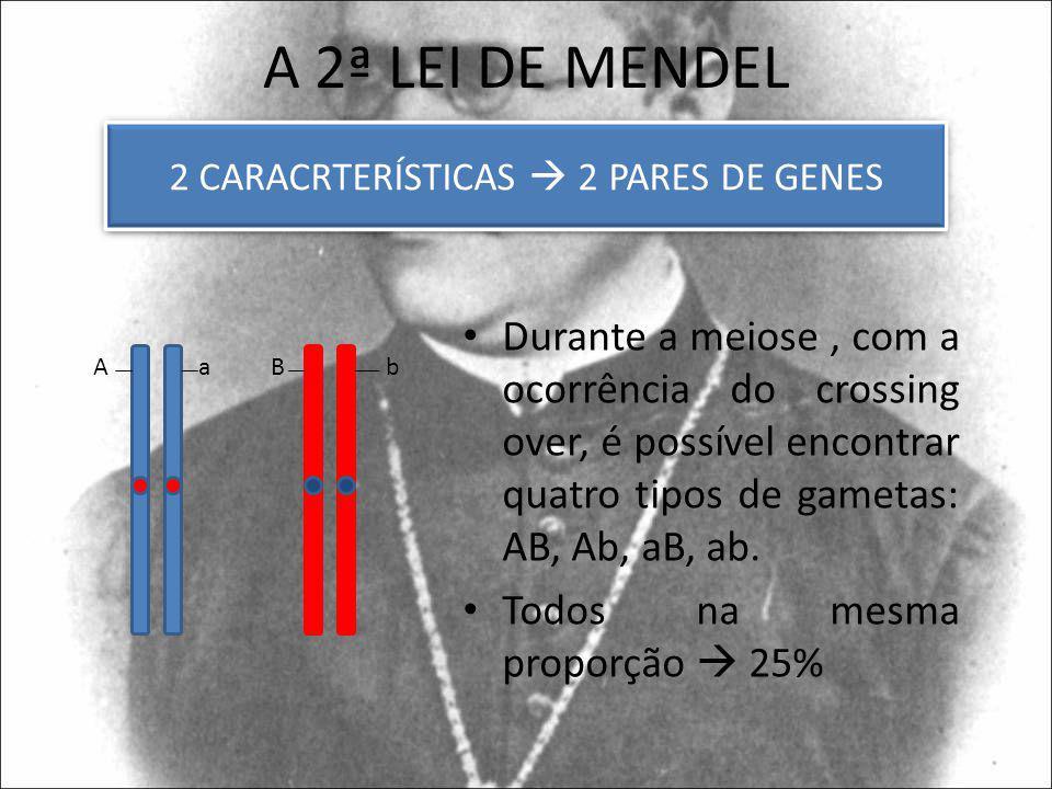 2 CARACRTERÍSTICAS  2 PARES DE GENES