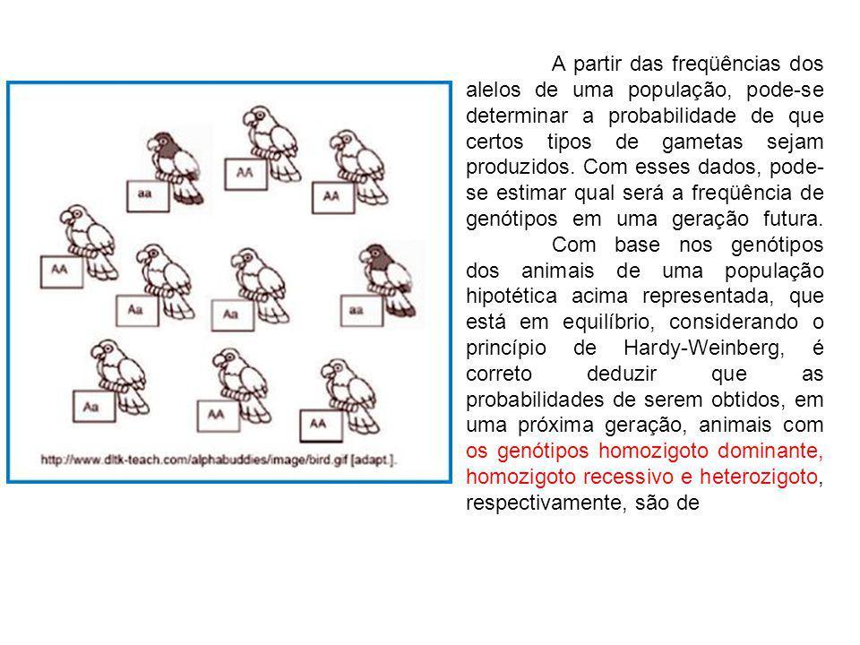 A partir das freqüências dos alelos de uma população, pode-se determinar a probabilidade de que certos tipos de gametas sejam produzidos.