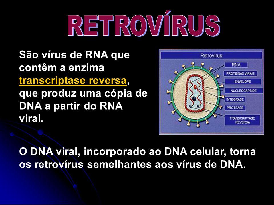 RETROVÍRUS São vírus de RNA que contêm a enzima transcriptase reversa, que produz uma cópia de DNA a partir do RNA viral.